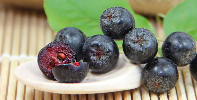 Meet the Aronia Berry: A North-American Fruit rich in Antioxidants | J&J Aronia